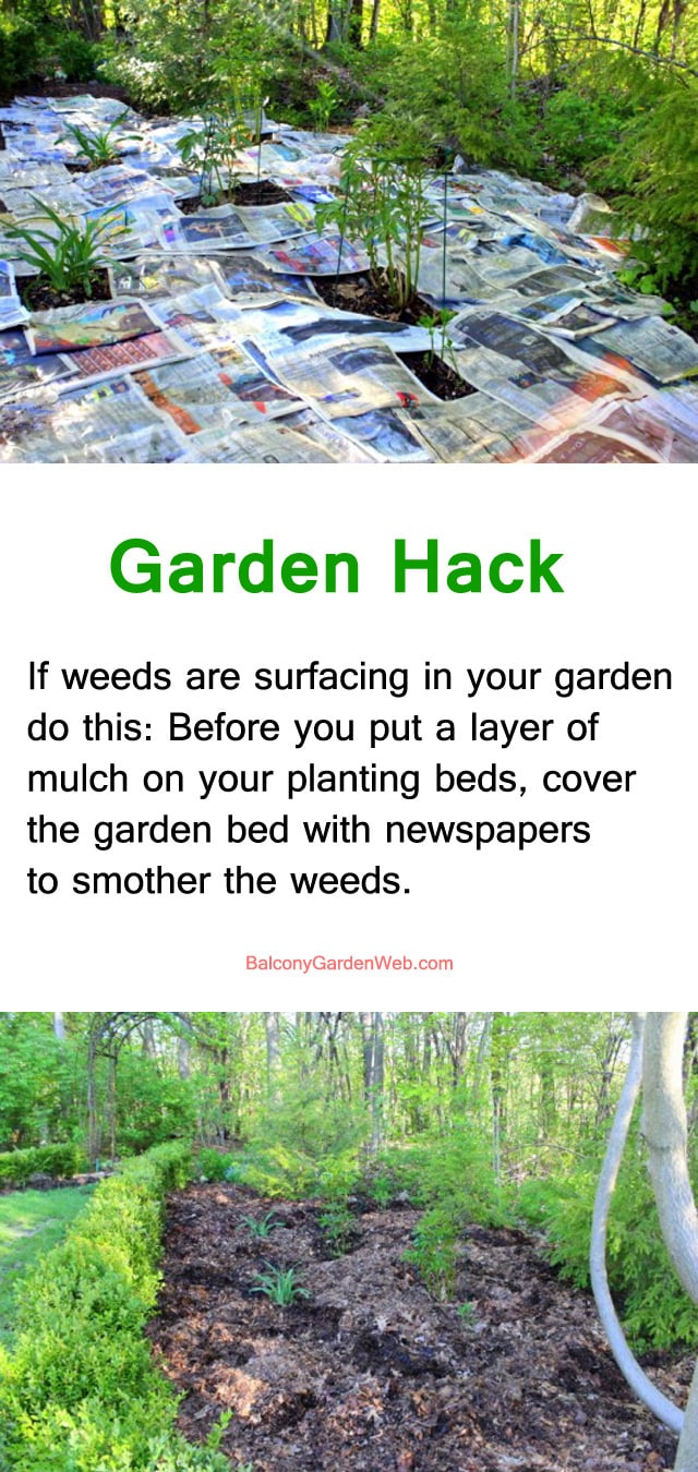 use newspapper to smother weeds- gardening hacks