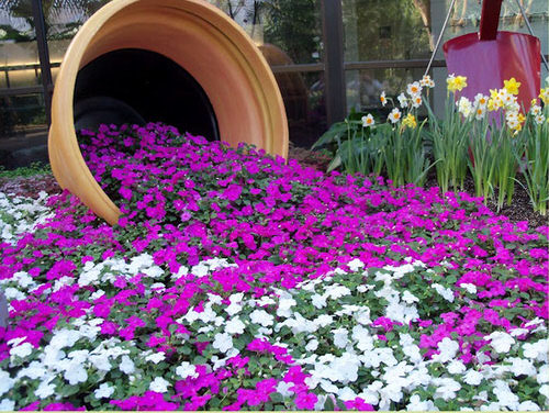 Best Flowering Ground Cover Plants 5