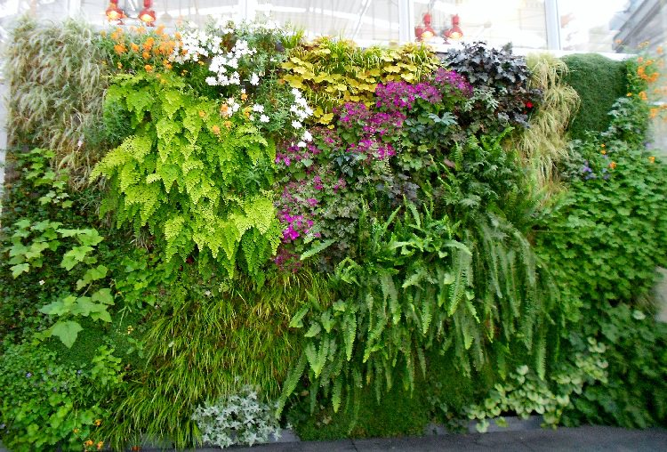 best plants for your vertical living wall garden - Wall Garden