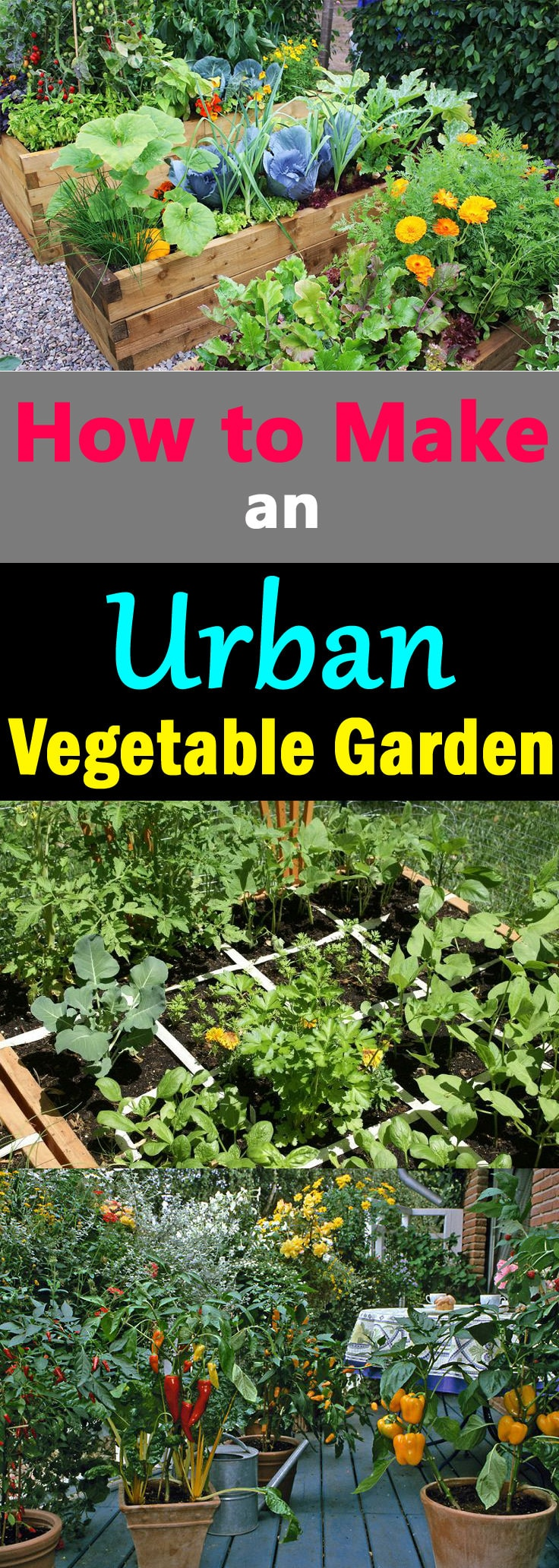 Want to know how to make an Urban Vegetable Garden? This article will help you in creating a functional and productive city vegetable garden.