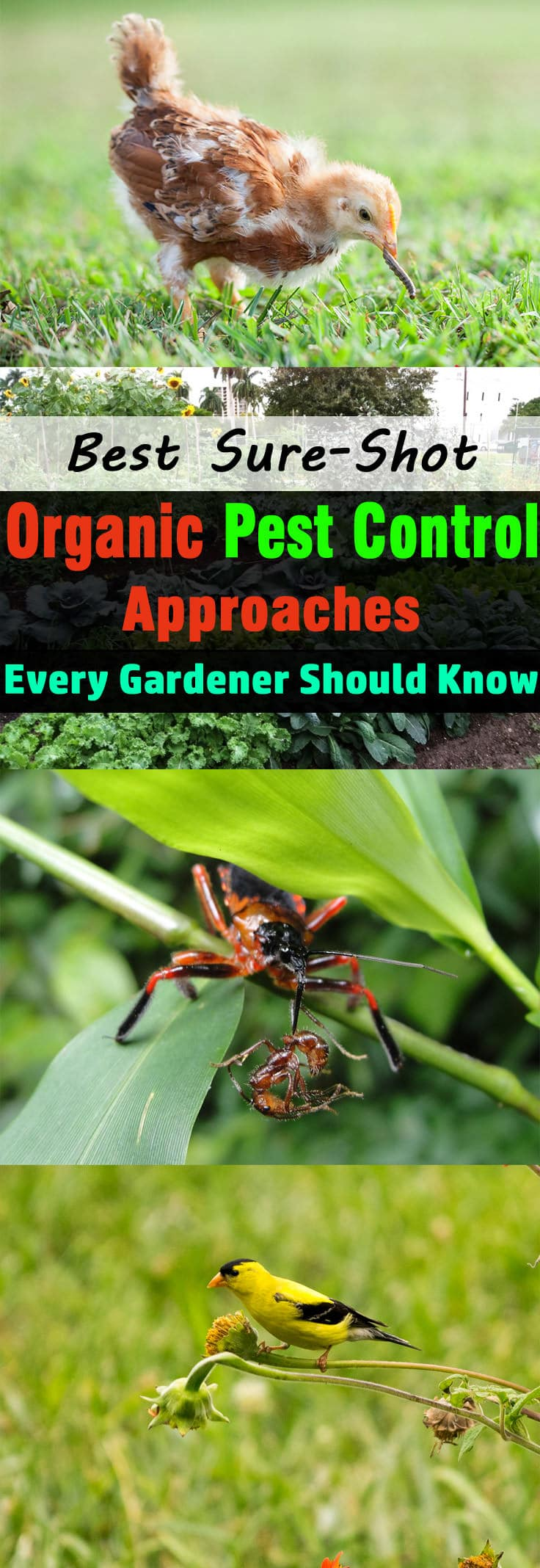 Getting rid of pests ORGANICALLY is the most challenging task for every gardener. So, here we're sharing 10 Sure-shot organic pest control approaches to make things easier.
