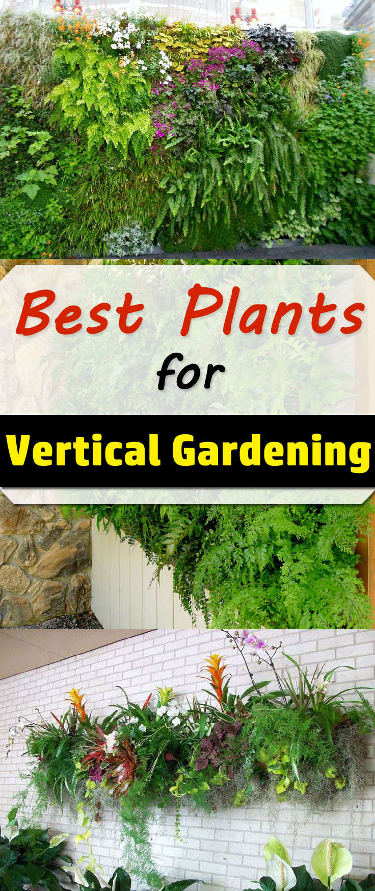 The correct selection of plants plays an important role in the design and functioning of vertical living wall gardens. In this article, we show a selection of the best plants for vertical gardening.
