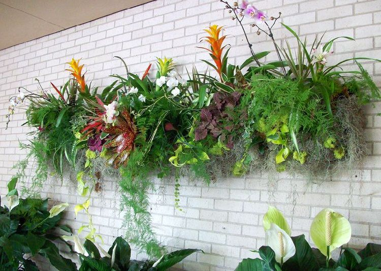 ferns and bromeliads in vertical living wall
