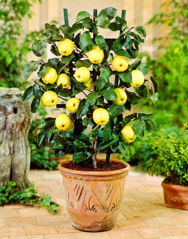 best fruits for containers