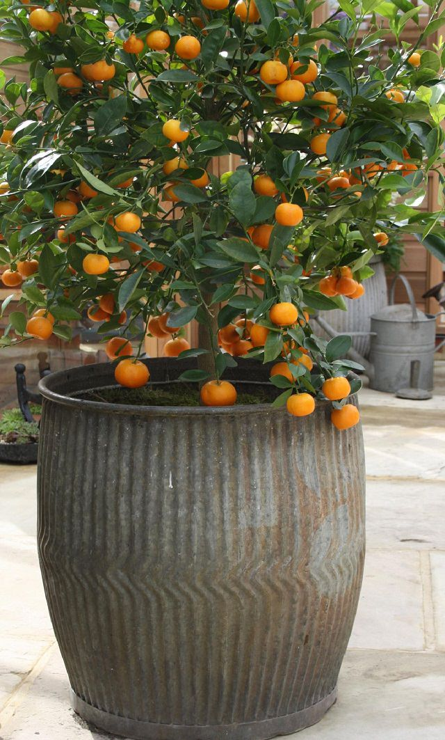 orange in container