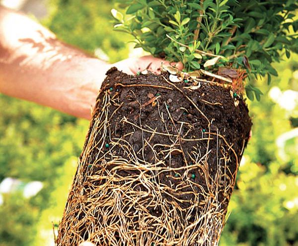 plant roots