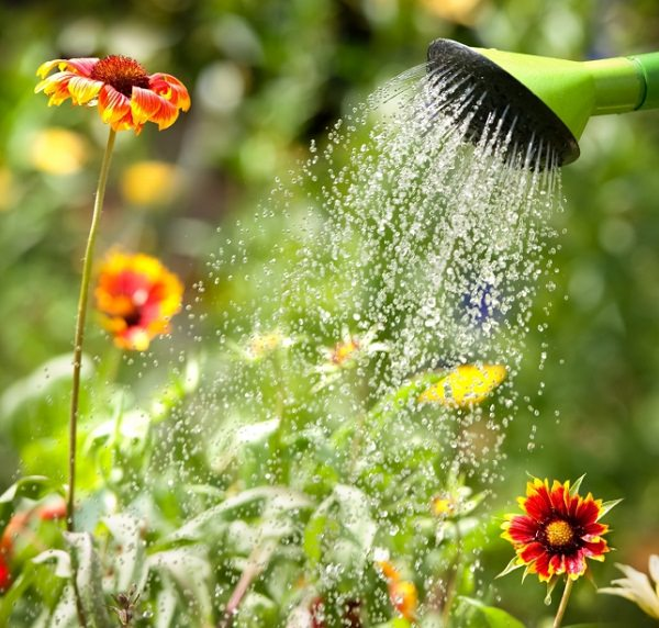 watering flowering plants