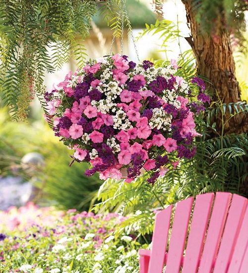 Best Plants For Hanging Baskets Balcony Garden Web