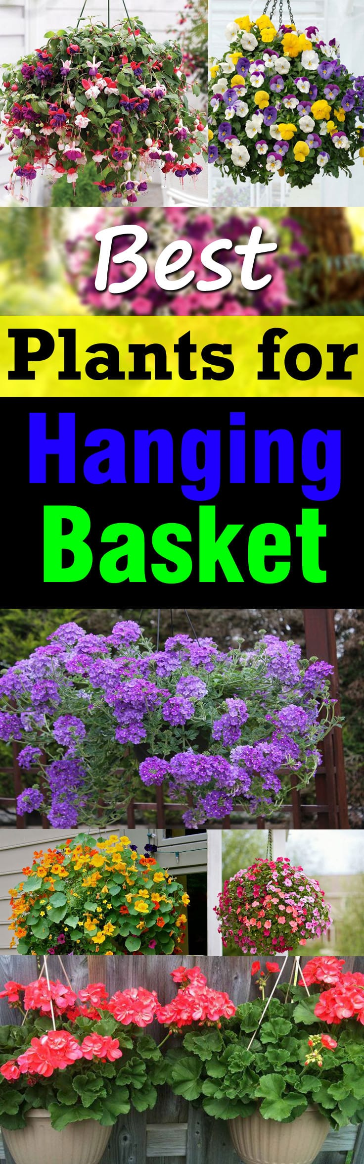 Learn About The Best Plants For Hanging Baskets Filled With Colorful Flowers And