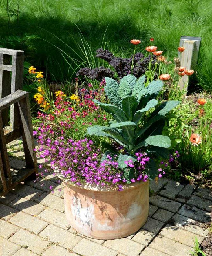 Kale in container with annuals