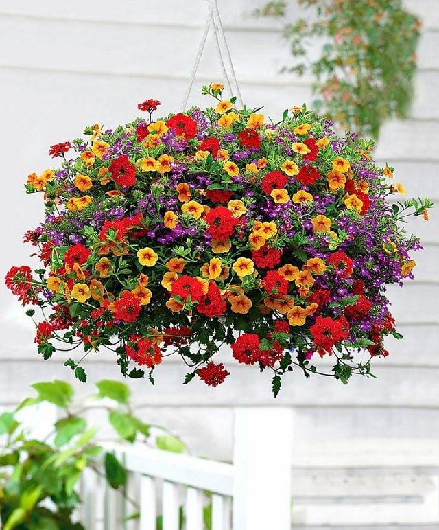 Image result for hanging basket flowers