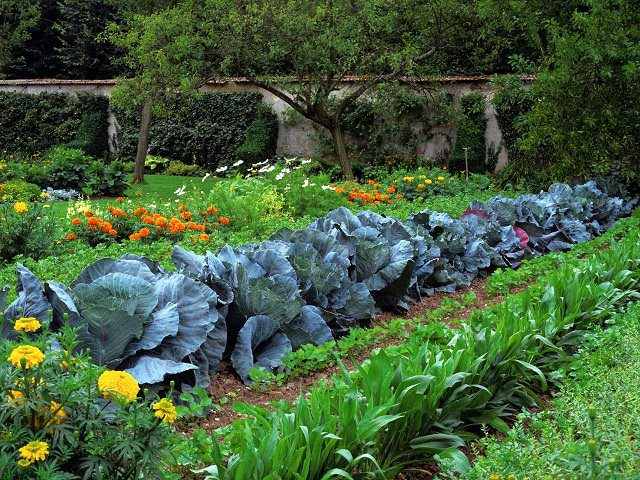 Secret to a Continuous Productive Garden