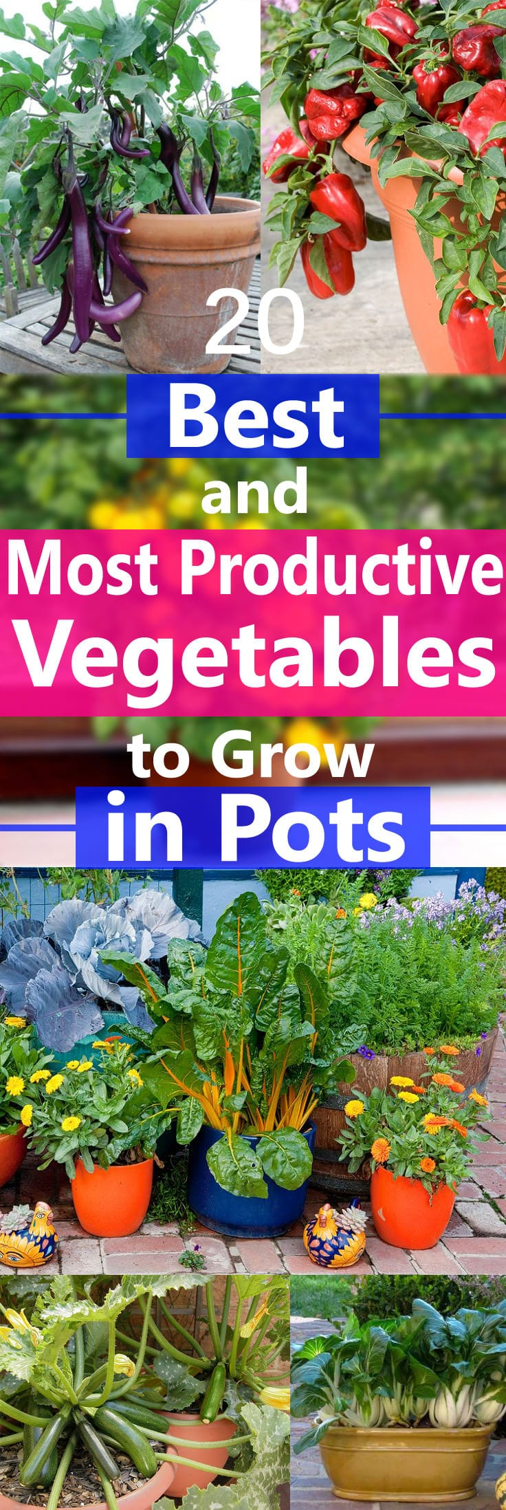Growing Vegetables In Containers Is Possible But There Are Some That Grow Easily And Produce Heavily