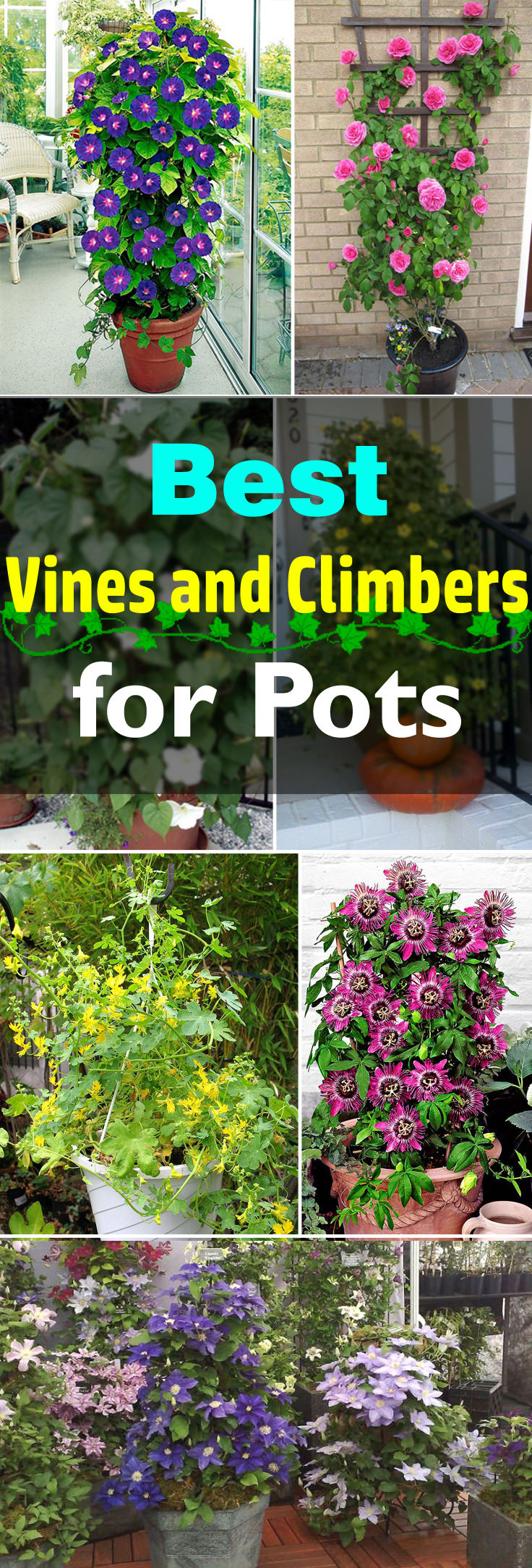 Add A Vertical Touch In Your Container Garden By Growing Climbing Plants For Containers Must