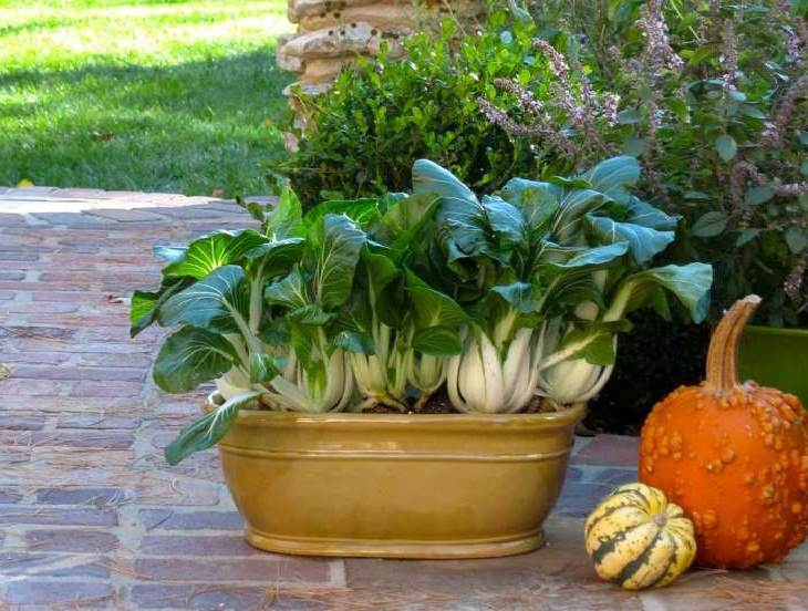 Growing vegetables in containers? Learn about the best and most Productive Vegetables to Grow in Potsto have the bountiful harvest this growing season.