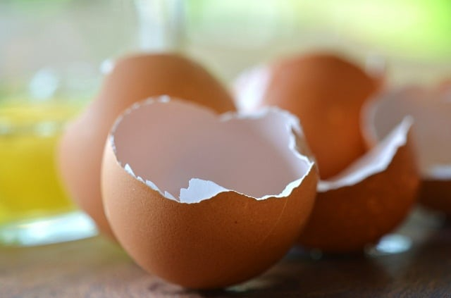 egg shells in garden
