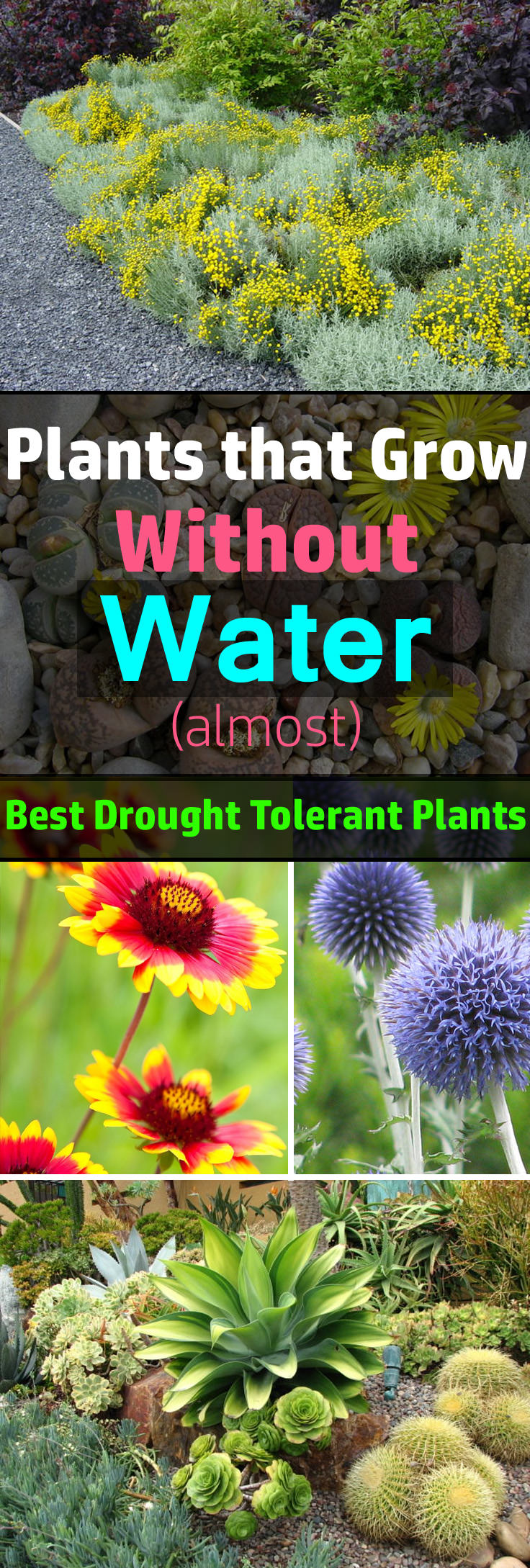 plants that grow without water (almost)
