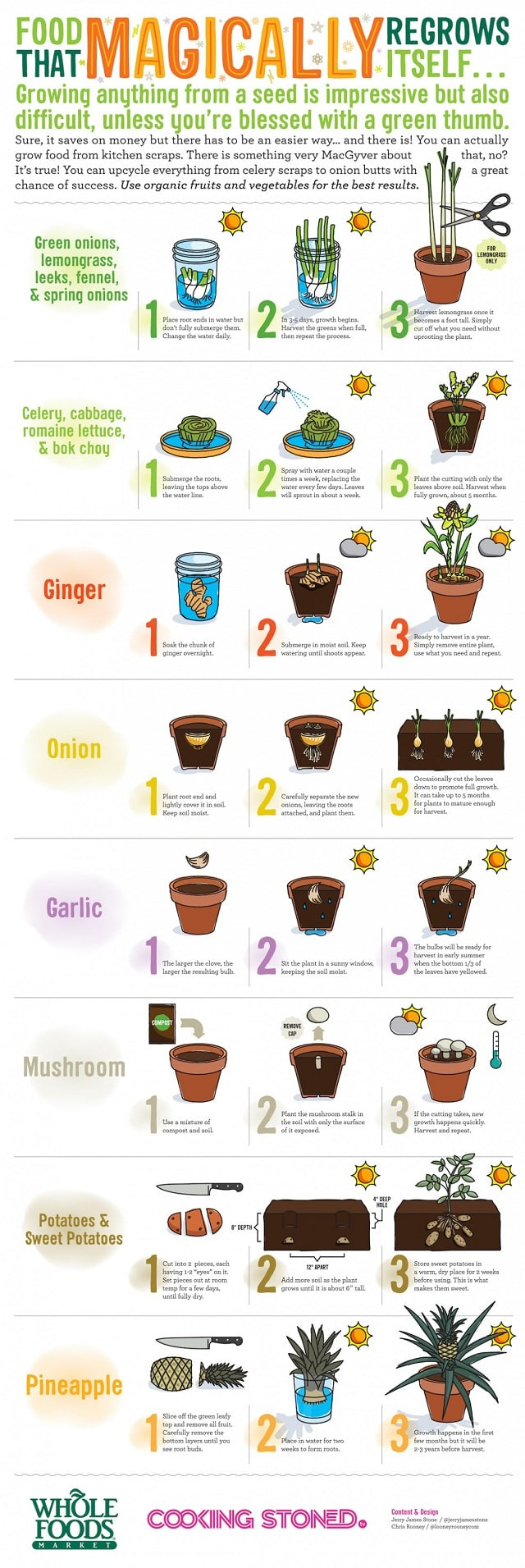 regrow-food-from-kitchen-scraps-infographic