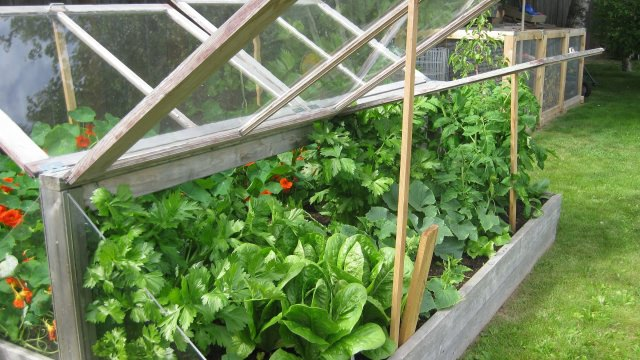 vegetable cold-frame