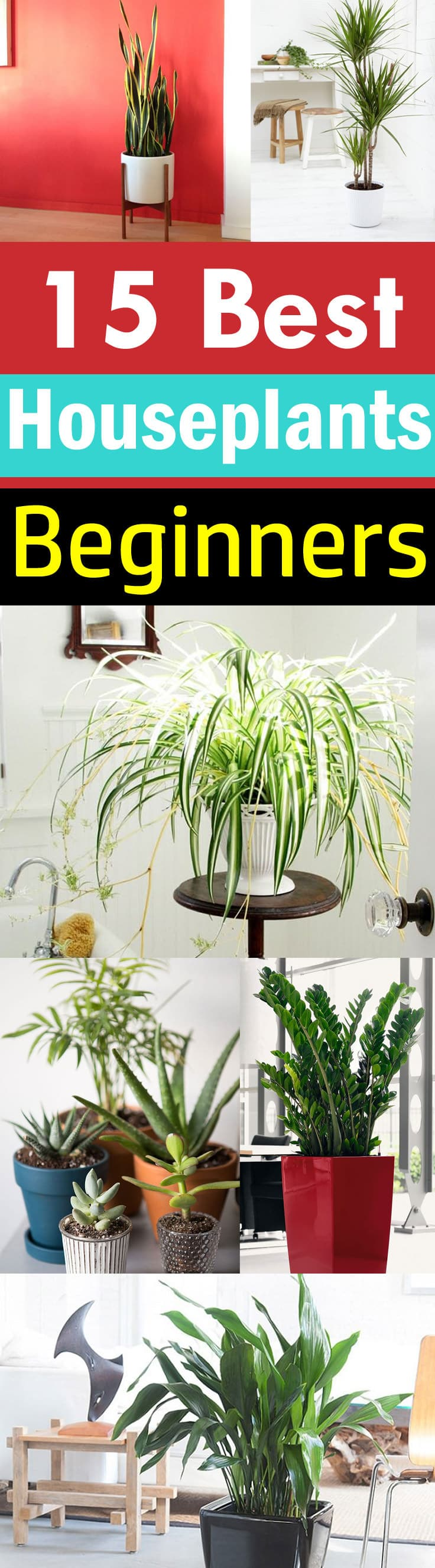 New to growing plants and no idea what you should grow indoors? Learn about these 15 Best Houseplants for Beginners. They all are easy to grow!