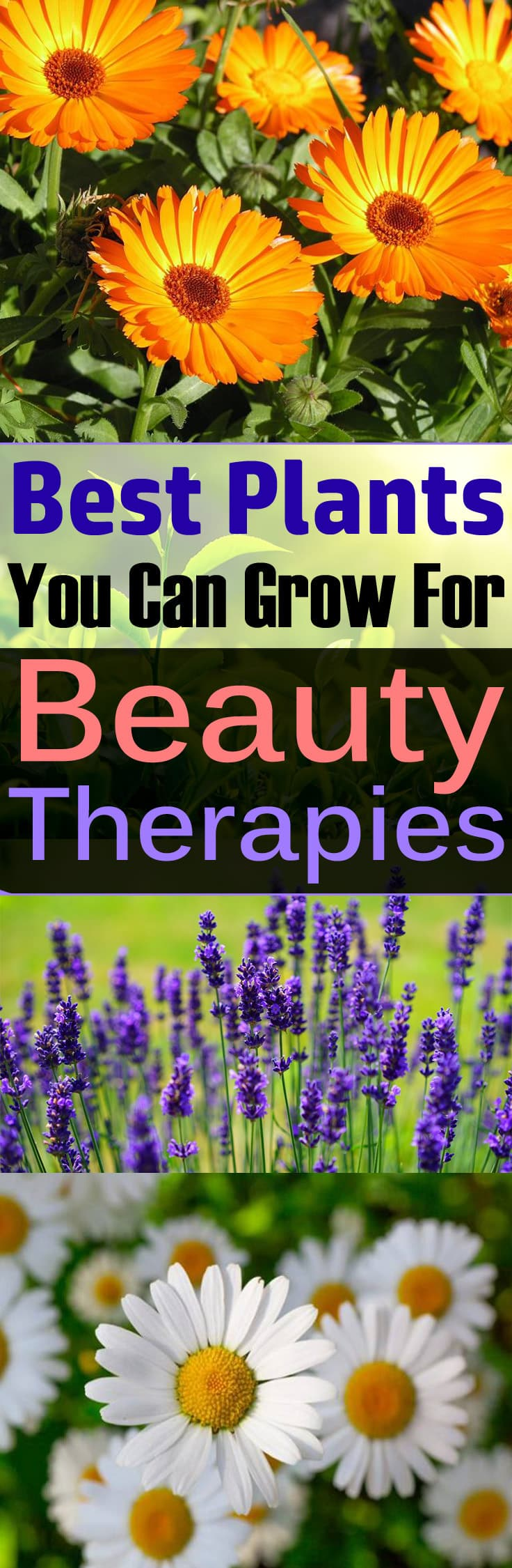 Want to grow plants that can make you more beautiful? Just learn about the plants you can grow for beauty therapies. Must Read!
