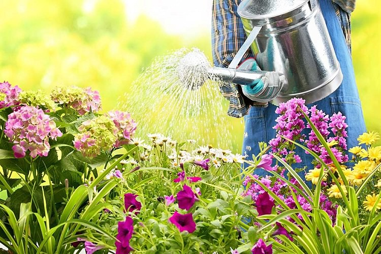 Essential Ways To Keep Your Garden Healthy 5