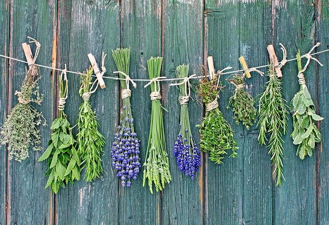 preserve your fresh garden herbs