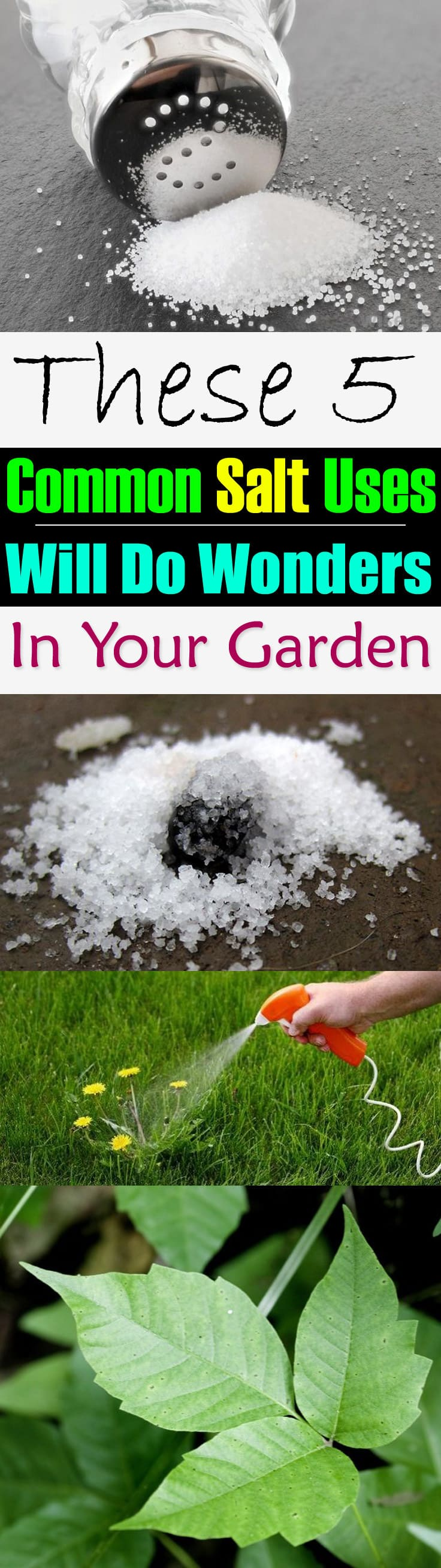 Salt is a must have in the kitchen but do you know it can be used in the garden, too! Here are the 5 best common salt uses for you to look at.
