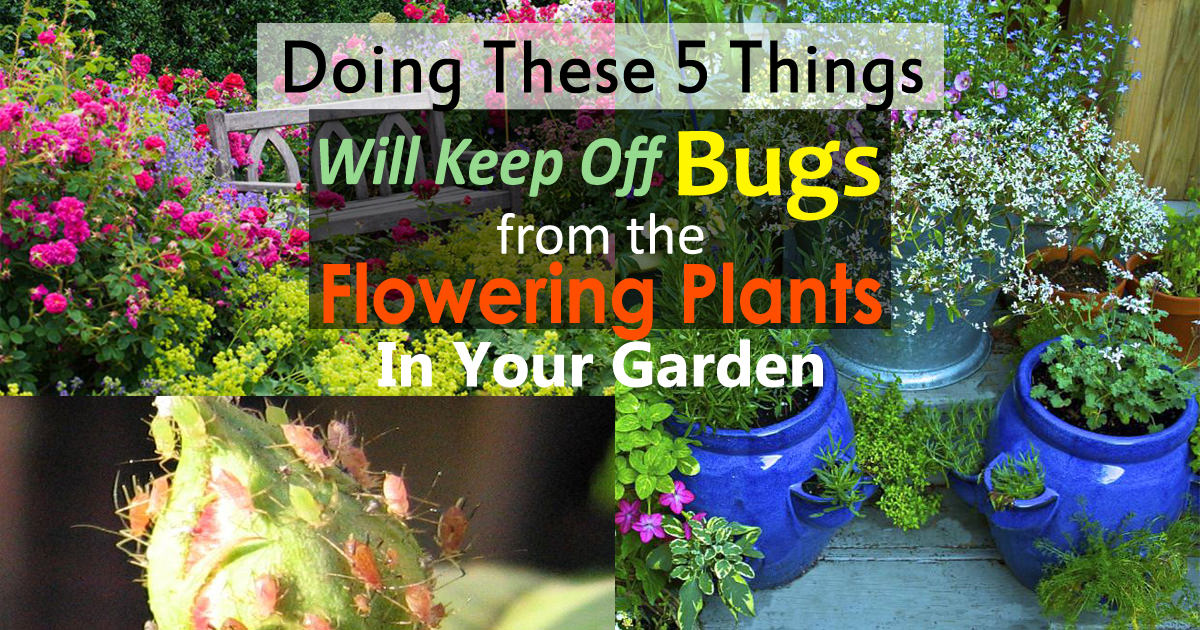 How To Keep Bugs Off Flowers | 5 Simple Ways | Balcony ...