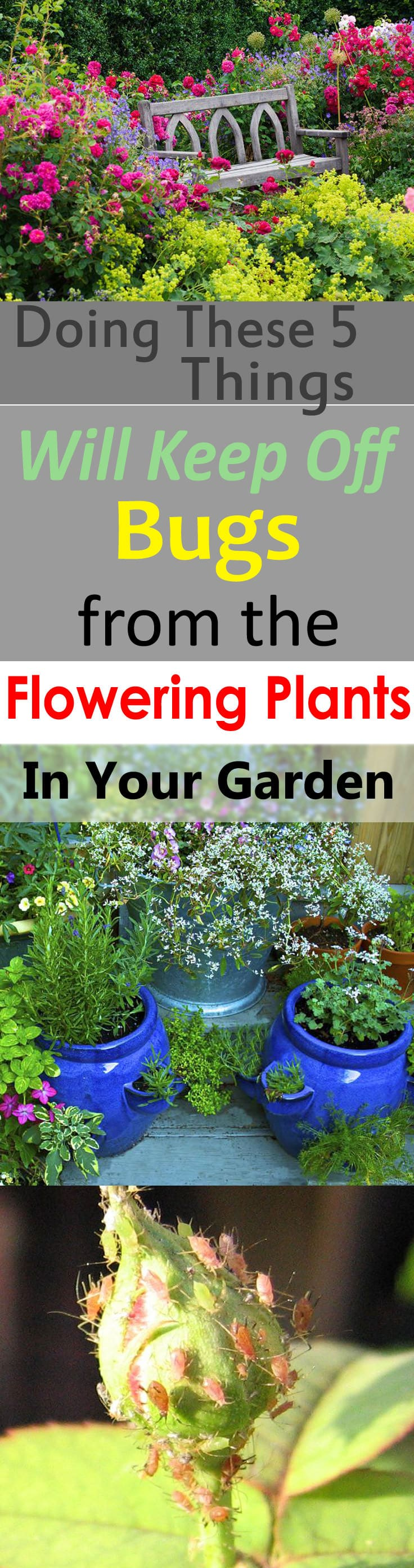 Are those pesky garden pests damaging your flowering plants? Read on! Doing these 5 things will surely keep off bugs from the flowering plants in your garden.