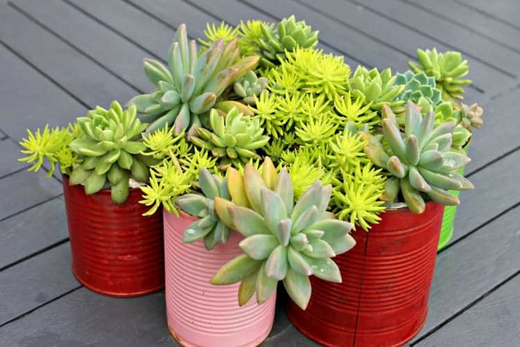 Painted Can Succulent Planter