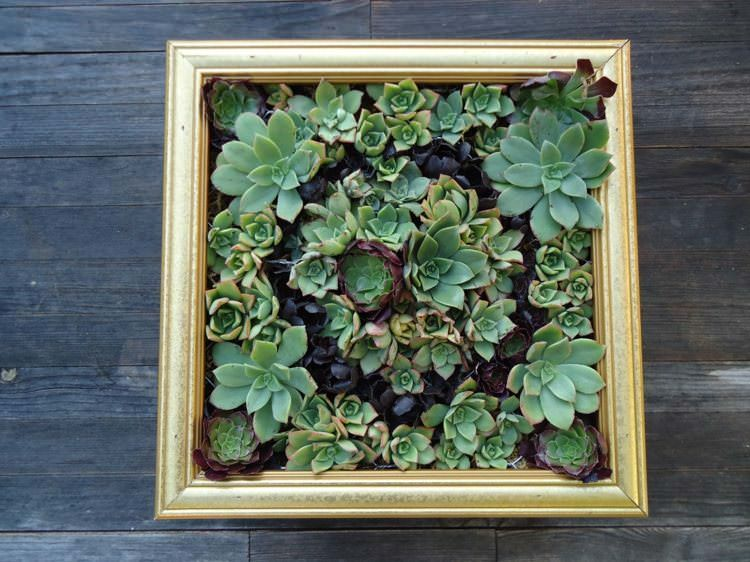 Succulent Green Wall with an Old Frame