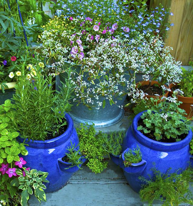 Use herbs to repel pests