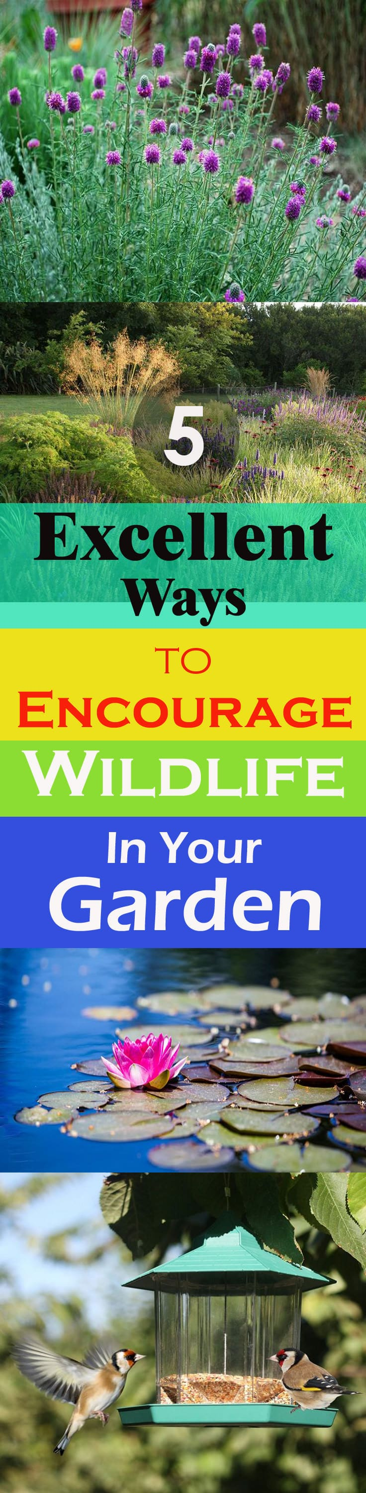 Attracting wildlife into your garden can make it more lively, it will also improve the overall health of your garden. Here are the 5 ways to do this!