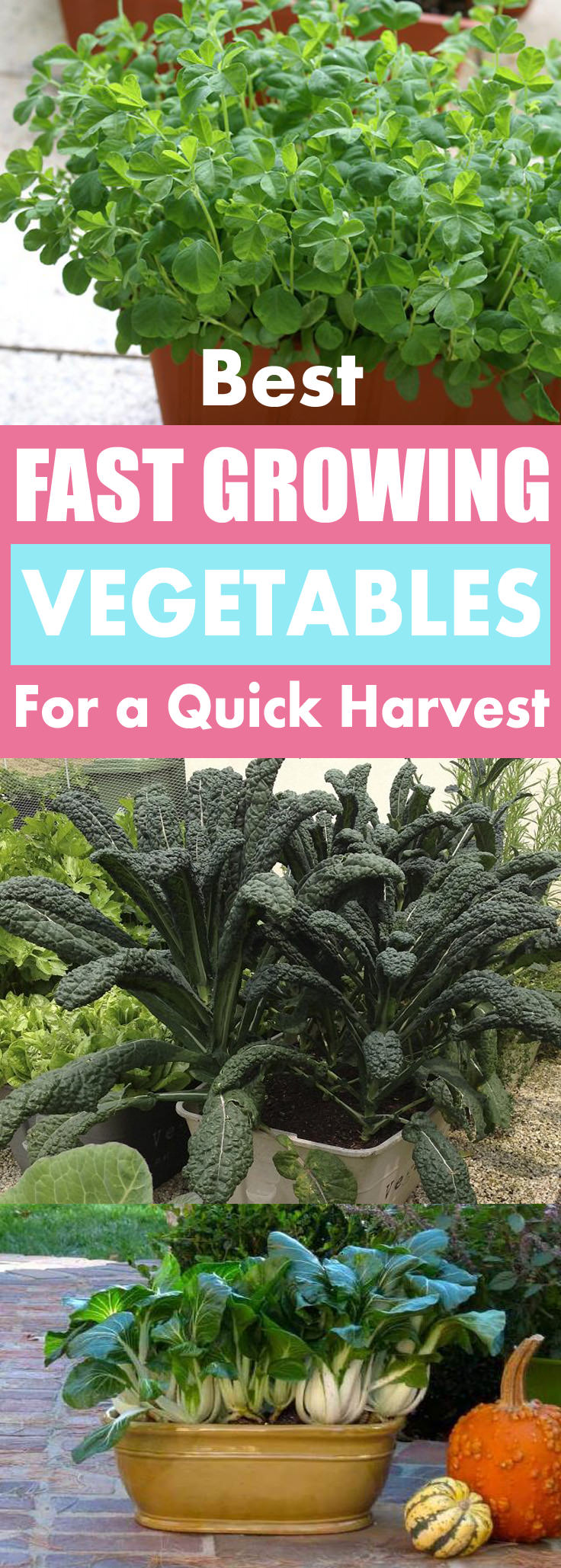 If you get little impatient when growing vegetables-- Must see this list of Fast Growing Vegetables. Most of these fast growing container vegetables can be harvested in 2 months or even quicker.