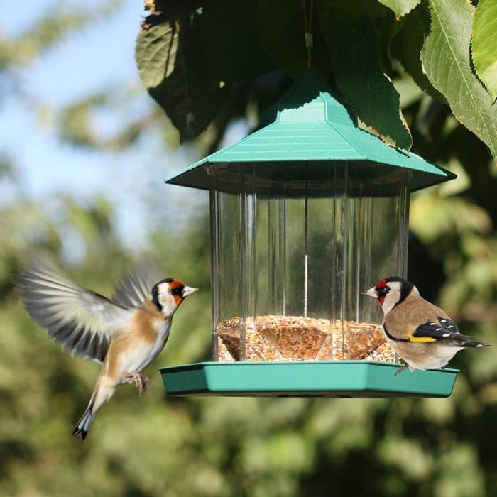 add a bird feeder to your garden to provide alternative food source to birds