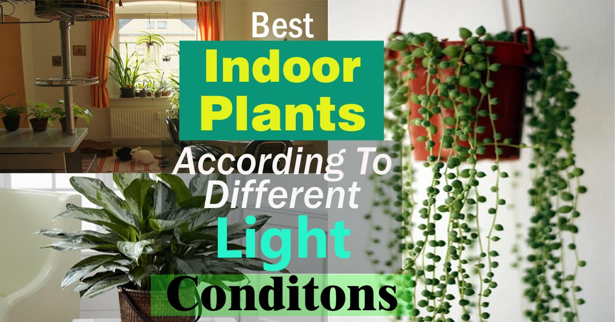 Best Indoor Plants According To Different Light Conditions