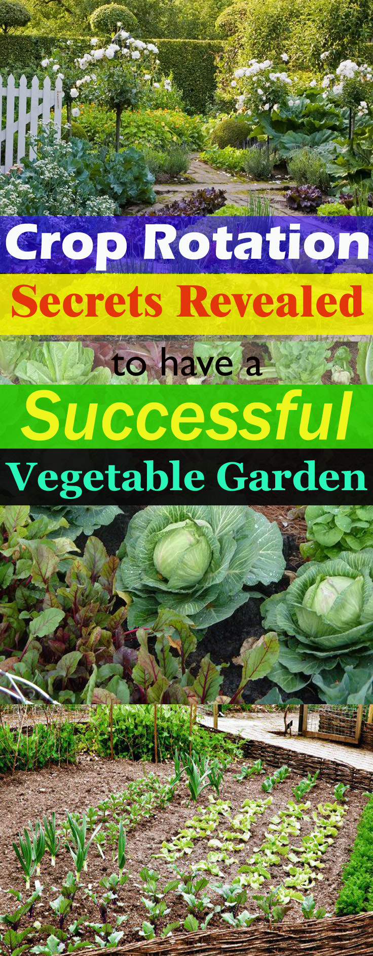 If you want to have a successful and most productive VEGETABLE garden, do crop rotation. Learn everything you need to know about it in this informative guide!