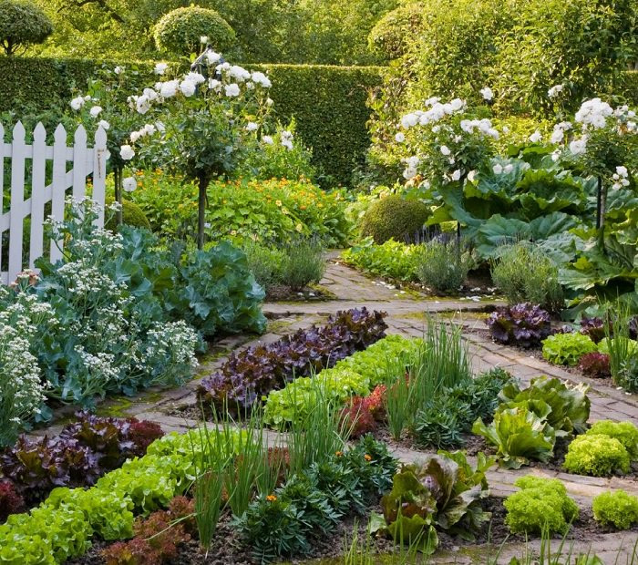 everything-you-need-to-know-about-vegetable-crop-rotation-2
