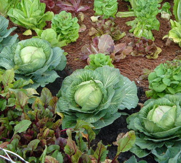 everything-you-need-to-know-about-vegetable-crop-rotation