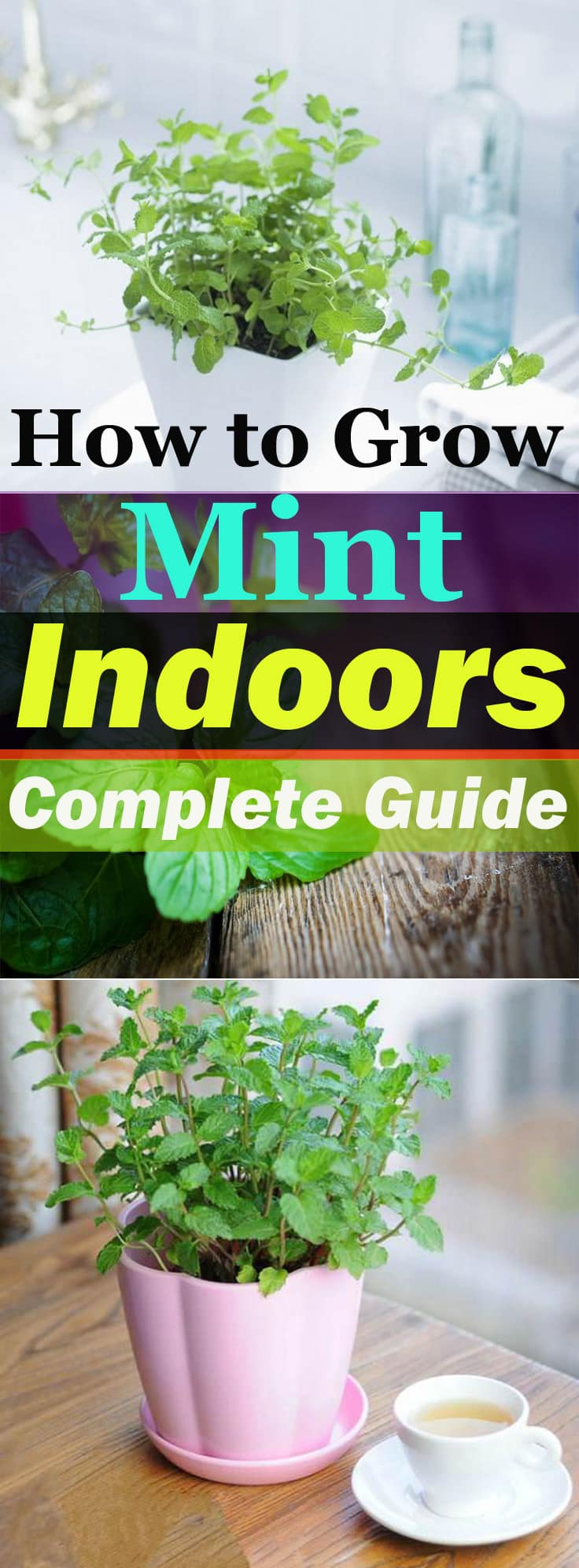Fragrant, fast-growing, and one of the best culinary herbs-- Mint can be grown indoors. Growing mint indoors is easy and doesn't require many efforts!