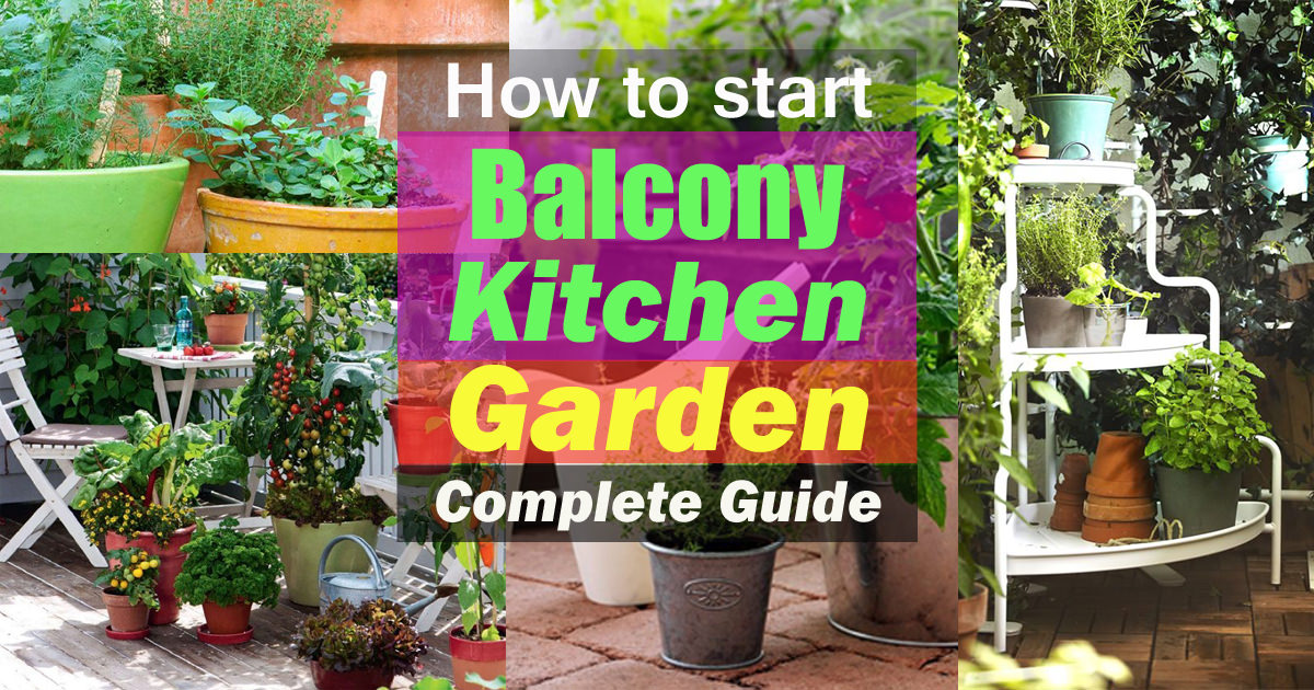 How To Start A Balcony Kitchen Garden Complete Guide