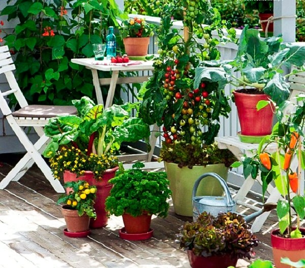 Garden Balconies: How To Start A Balcony Kitchen Garden