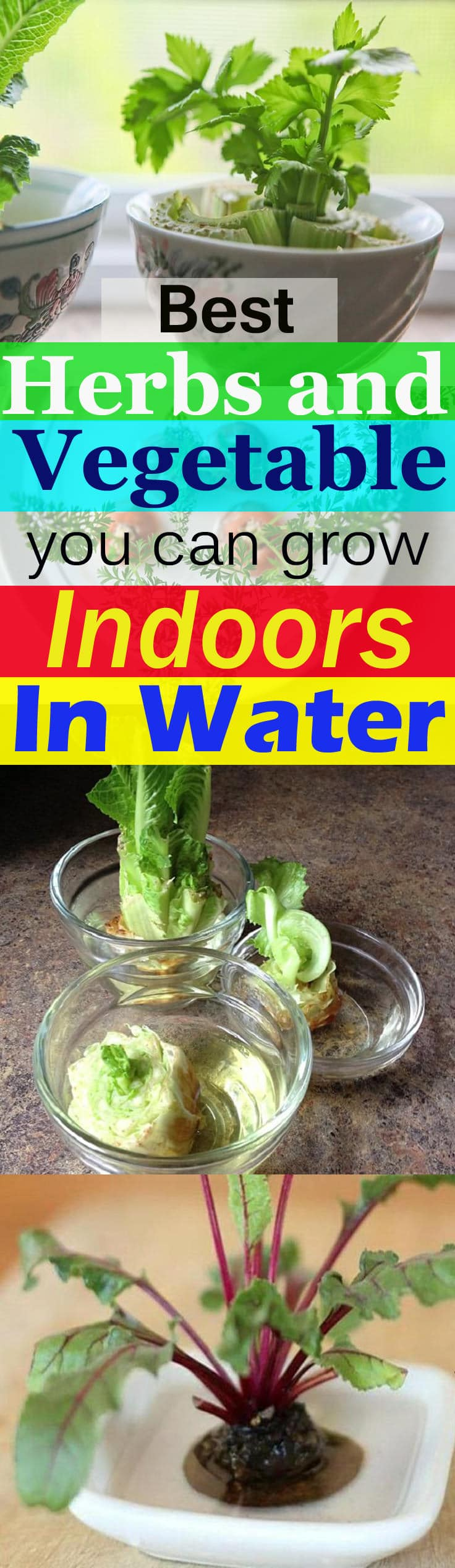 There Are Herbs And Vegetables That Regrow In Water Indoors You Can Grow Them From Ss