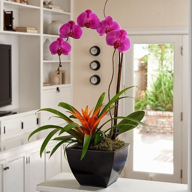 9-colors-of-houseplants-to-beat-the-winter-blues-1