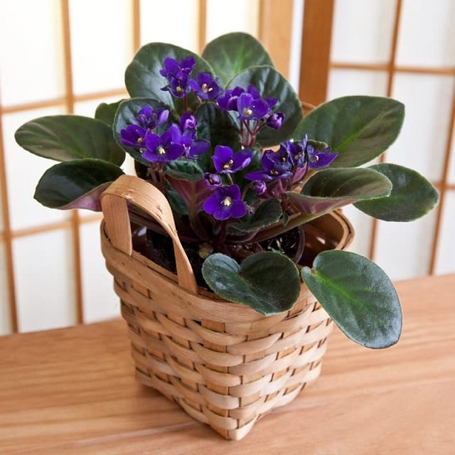 9-colors-of-houseplants-to-beat-the-winter-blues-3