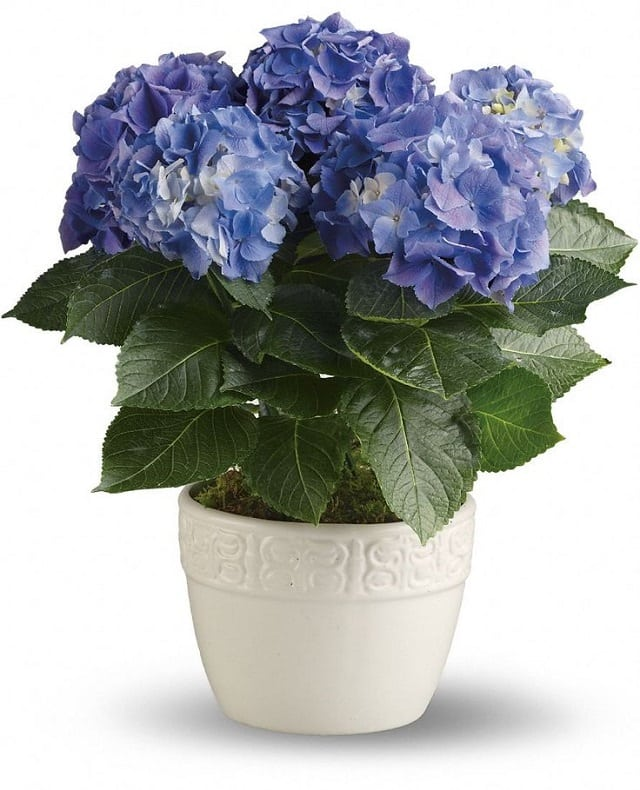 9-colors-of-houseplants-to-beat-the-winter-blues-4