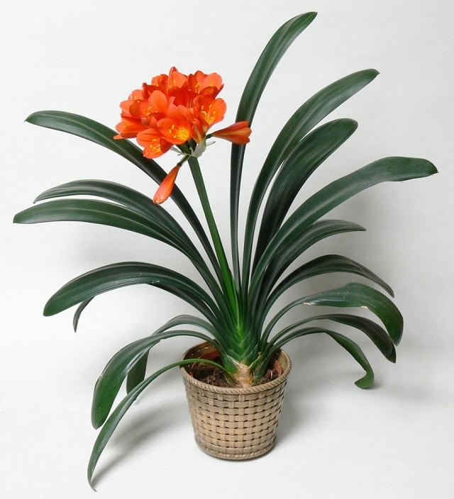 Orange 9 Colors Of Houseplants To Beat The Winter