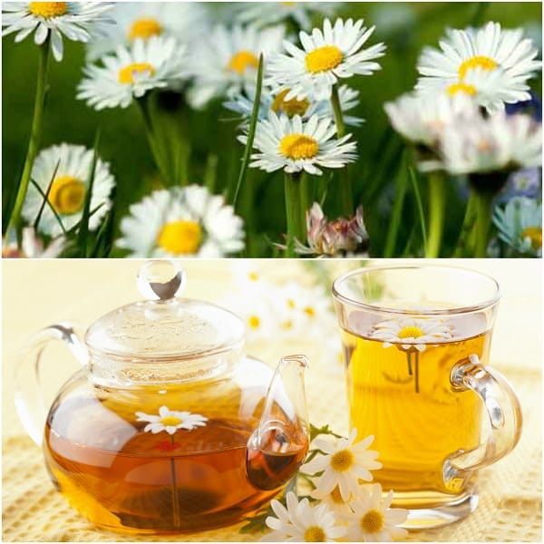 chamomile-flowers-1