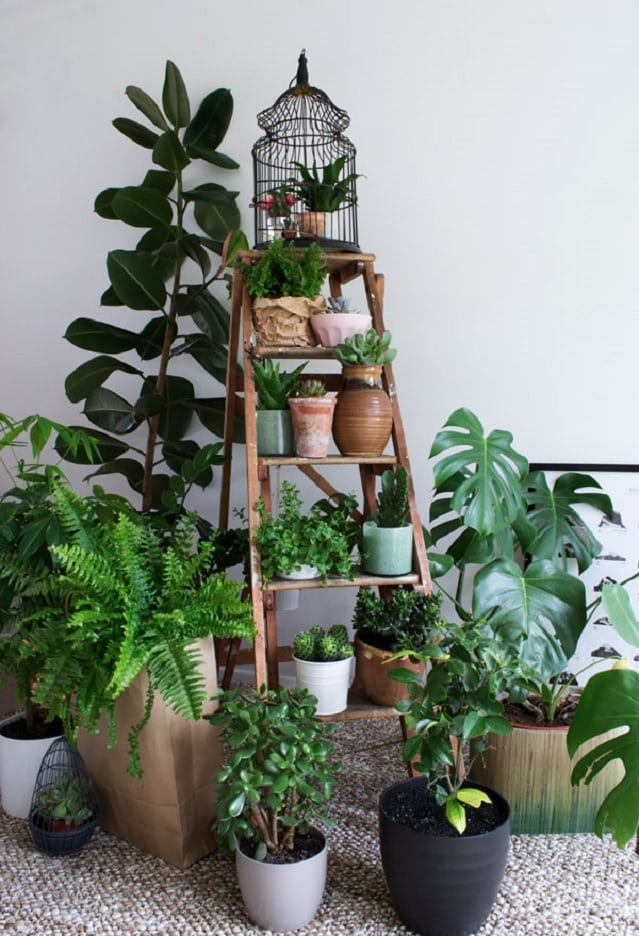 Ladder planter creates a lot of space for keeping plants.